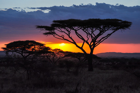 incomparable: Sunset in the Serengeti reserve