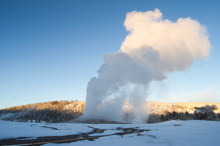 the faithful: Old Faithful in Yellowstone Park