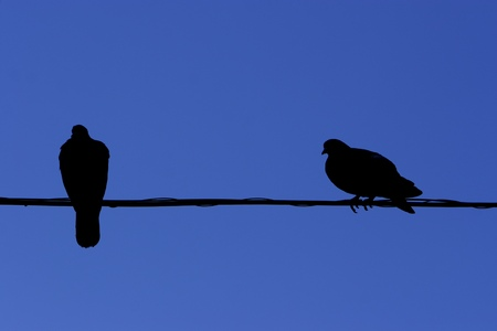 resentment: Birds relationship. Love and resentment.