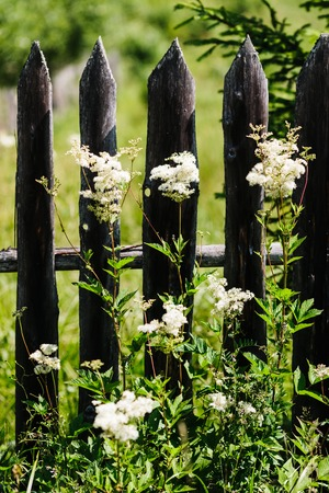Weed against the old wooden fence