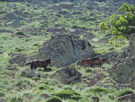 yearly horse Stok Fotoğraf