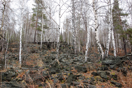 urals: The stone river. The slope of mount Volchikha in the middle Urals. Environs Of Ekaterinburg Stock Photo