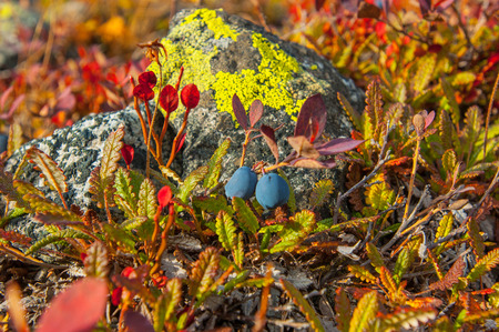yielding: Two black berries blueberry cold embracing waiting.