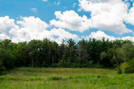 Forest Line Against Blue Sky - Mariposa Recreational Area