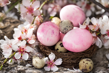 Pink easter eggs and quail eggs in the small nest under almond blossom