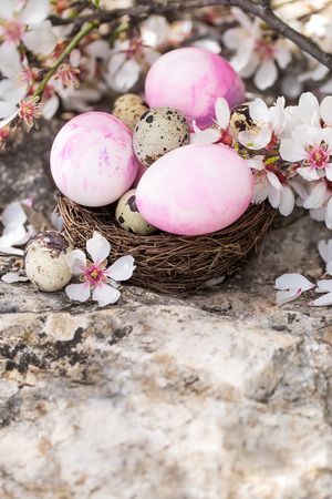 Pink easter eggs and quail eggs in the small nest under almond blossom. Copyspace background.