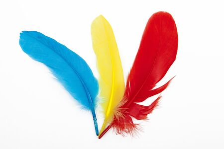 Colored feathers over white background. Stock Photo