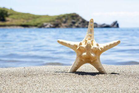 Sea star on sandy beach on sunny day. Relaxation concept.