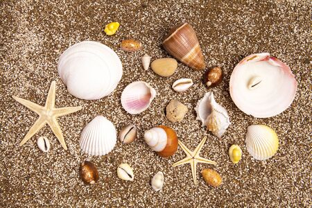Sea star and sea shells on sandy beach on sunny day. Relaxation concept.