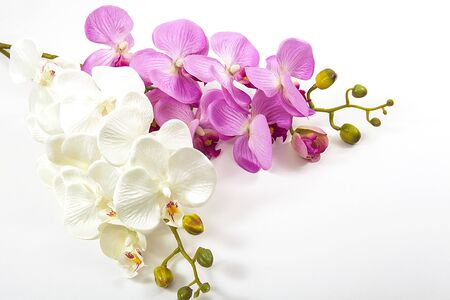 Artificial flowers. White and pink orchids.
