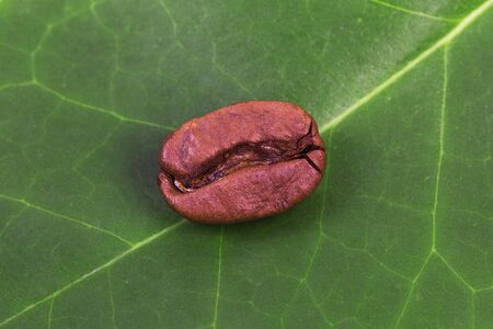 Roasted coffee bean on green leaf background.