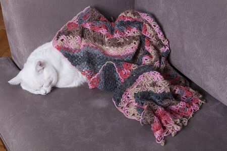 Cute kitty is resting on the sofa. It is Sleeping and wrapped in soft blanket. Stock Photo