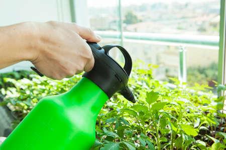 The woman is watering the seedlings. Reklamní fotografie