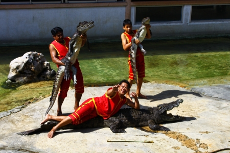The show crocodile in Thailand