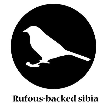 side viewing: Rufous-backed sibia shadow Illustration