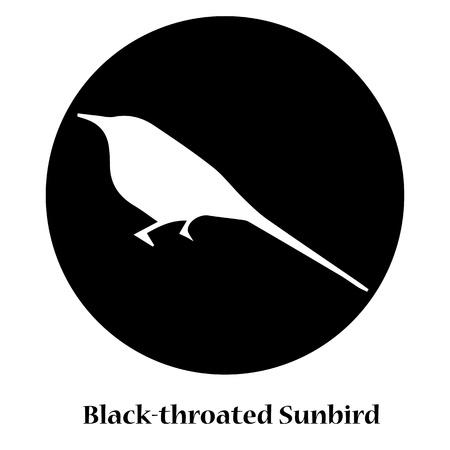 side viewing: Black-throated Sunbird Shadow Illustration