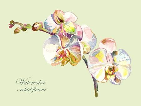 식물상: 수채화 난초 꽃