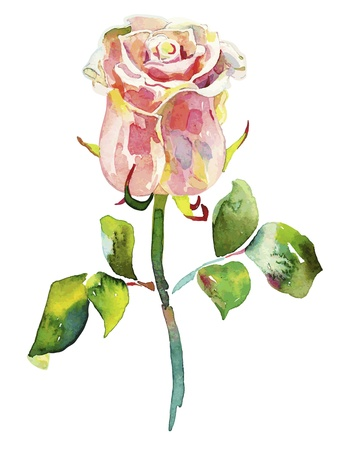 pink watercolor rose  Vector
