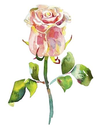 pink watercolor rose Stock Vector - 12392523