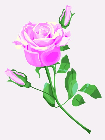 pink rose Stock Vector - 12392513