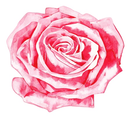 romantic watercolor  rose Vector