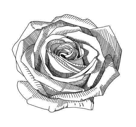 Flores Para Dibujar Imagenes De Archivo Vectores Flores Para