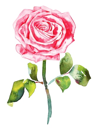 freehand: romantic watercolor  rose Illustration