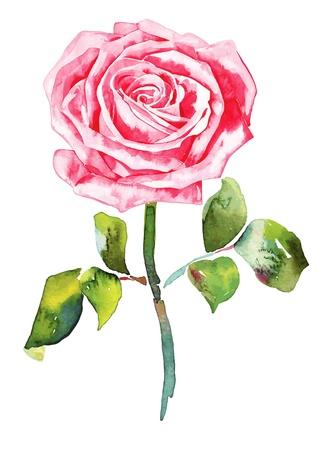 romantische Aquarell Rose