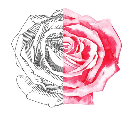 hand draw sketch ink and watercolor rose Vector