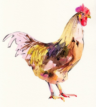 am: watercolor painting sketch cock  I am author of this illustration  Stock Photo