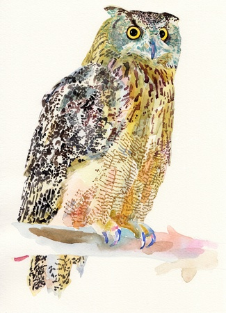 nocturnal animal: original watercolor painting of bird, owl on a branch  Bubo Virginianus Subarcticus   I am author of this illustration