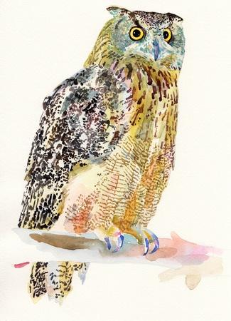 night bird: original watercolor painting of bird, owl on a branch  Bubo Virginianus Subarcticus   I am author of this illustration
