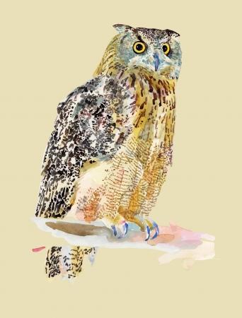 trabajo manual: pintura a la acuarela de las aves, la lechuza Yo soy autor de esta ilustración