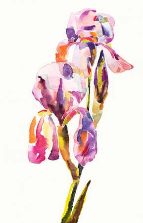 original  color illustration of flower in watercolor painting  I am author of this illustration Stock Illustration - 13770497