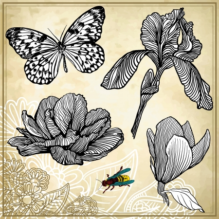 set of hand drawing flower and butterfly Vector