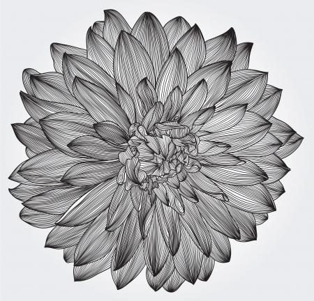 디자인, 조각 스타일 블랙 달리아 꽃, 요소의 잉크 드로잉