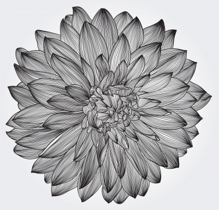 macro flower: ink drawing of black dahlia flower, element for your design, engraving style