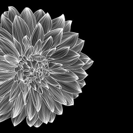 dalia: tarjeta en blanco y negro de diseño con el dibujo de la flor de la dalia. Elemento para el diseño de estilo de grabado,
