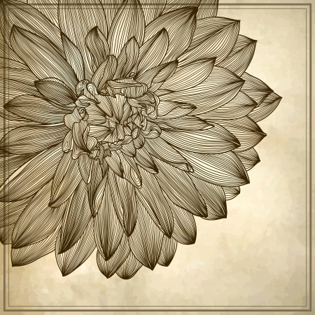 drawing of dahlia flower on grunge background. Element for your design, engraving style