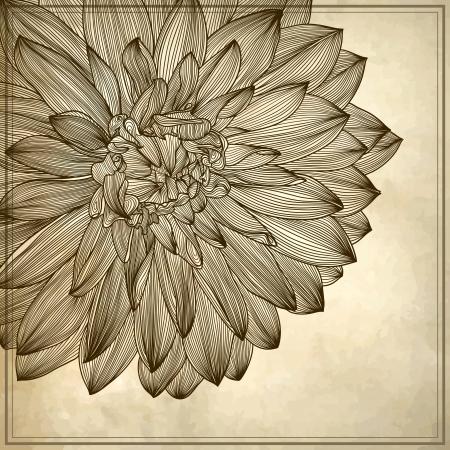 botanika: výkres jiřina květ na pozadí grunge. Prvek pro design, rytí stylu
