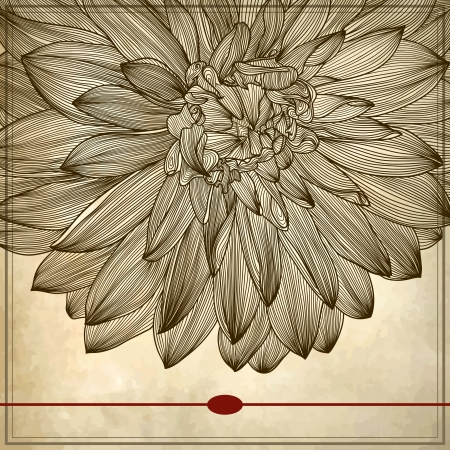 drawing of dahlia flower on grunge background. Element for your design, engraving style Stock Vector - 15555315