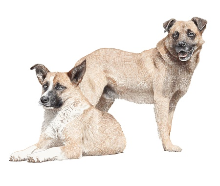 obedient: picture drawing of two dogs, isolated on white, vector version Illustration