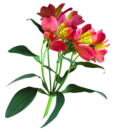 Digital graphic of flower isolated on white photo