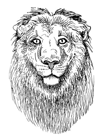 artwork lion, sketch black and white drawing of head animals Vector