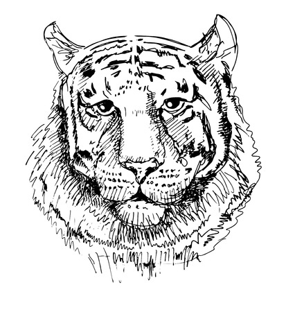 greatness: Artwork tiger, sketch black and white drawing, isolated on white background. Head animals vector illustration
