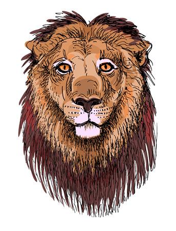 royal safari: artwork lion, sketch drawing of head animals Illustration