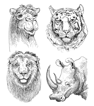 set of safari head animals, black and white sketch drawing of rhinoceros, camel, lion and tiger, isolated on white background