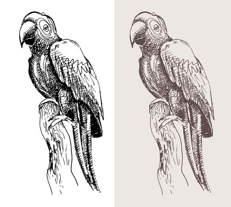 cockatoo: original artwork parrot, black sketch drawing bird, isolated on white background, and sepia color version, vector llustration