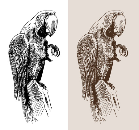 original artwork parrot, black sketch drawing bird, isolated on white background, and sepia color version, vector llustration