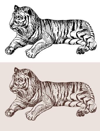 drawing an animal: tiger originali opere d'arte, nero schizzo disegno animale, isolato su sfondo bianco, e la versione color seppia, vettore llustration